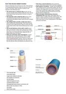 vein-information.docx