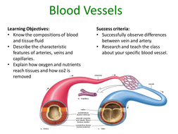 Blood-Vessels.pptx