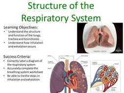Structure of respiratory system gcseas by jeffsstarscience structure of respiratory system autosaved pptx ccuart Images