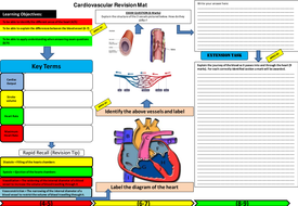 Cardiovascular System revision mat