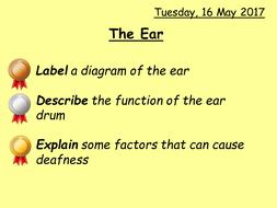 2.-The-Ear.pptx