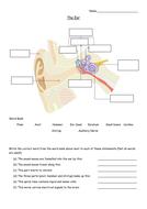 2.-The-ear-worksheet.docx