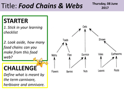 Food-Chains---Webs-PPT.pptx