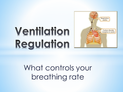 B3.-Ventilation-breathing-rates.pptx