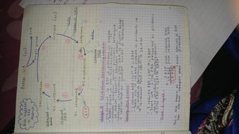 Krebs cycle diagram and oxidative phosphorylation calculations .jpg