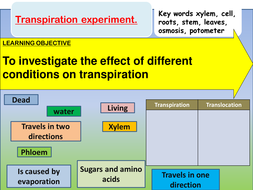 transpiration-investigation.pptx