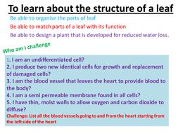 B2 scheme of work/part unit of work lessons 13-17 Plants