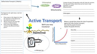 Active transport revision sheet mat worksheet aqa 9 1 biology active transport revision sheetpptx ccuart Image collections