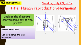 AQA new specification-Human reproduction-B11.5