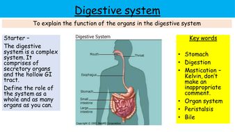Digestive system enzymes new aqa gcse by killelay teaching digestive system enzymes new aqa gcse ccuart Gallery
