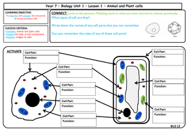 AQA GCSE Biology - Cell Biology - Animal and Plant Cells ...