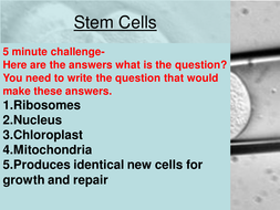 b1-lesson-7-Stem_Cell_objective.ppt