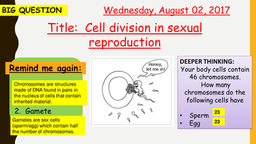 AQA new specification-Cell division in sexual reproduction (meiosis)-B13.2
