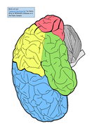 Brain-Cut-Out.pdf