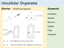 KS3 Cells - Lesson 6 - Unicellular Organisms.pptx
