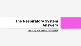 The-Respiratory-System-Exam-Answers.pptx