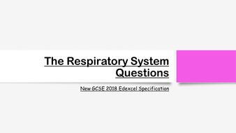 The-Respiratory-System-Exam-Questions.pptx