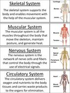 Human-Body-Systems-Word-Wall.pdf