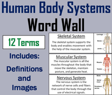 Human Body Systems Word Wall Cards