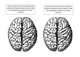 L3-Brain-to-label.docx