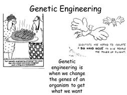 B14.4 Genetic Engineering NEW AQA