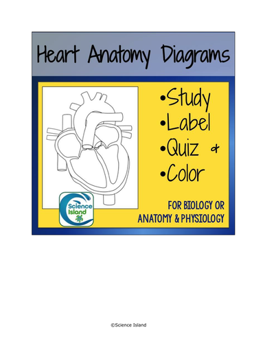 Heart anatomy diagrams and quiz by scienceisland teaching heart anatomy diagrams and quiz by scienceisland teaching resources tes ccuart Choice Image