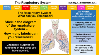 New aqa gcse the respiratory system by sr276 teaching resources 113 the respiratory systempptx ccuart Images