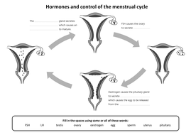 Hormones-and-the-mentrual-cycle-fill-in-sheet.docx
