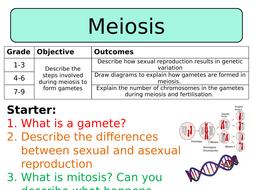NEW AQA GCSE Trilogy (2016) Biology - Meiosis