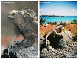 Genetics---Basic-concepts-iguana-images.pdf