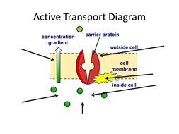 GCSE KS4 Biology (Science) Cells Revision Lesson by ...