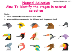 aqa a level biology natural selection by scienceteachsecondary