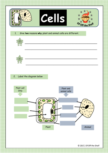 Plant and Animal Cells Structure and Differences Worksheet ...