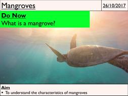 25---Mangroves.pptx