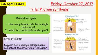 B13.5-Protein-synthesis.pptx