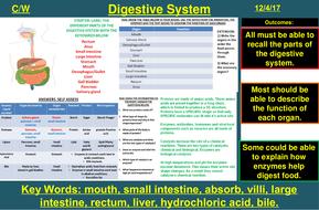 The Human Digestive System & Enzymes | AQA B1 4.2 | New Spec 9-1 (2018)