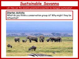 23.-Sustainable-Savanna.pptx