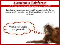 22.-Sustainable-Rainforest.pptx