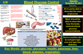 Control of Blood Glucose Concentration   AQA B2 4.5   New Spec 9-1 (2018)