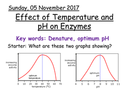 what is the lock and key model of enzyme activity pdf