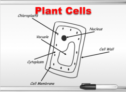 animal-plant-cell-2.png