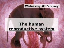 The-human-reproductive-system-presentation.pptx