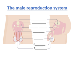Male-repro-system-worksheet-higher.docx