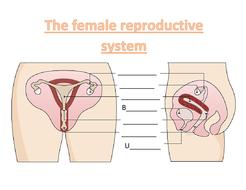 female-repro-system-worksheet-higher.docx