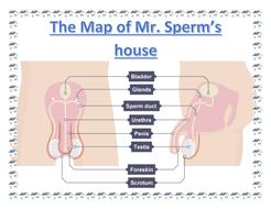 Mr-Sperm's-house.docx