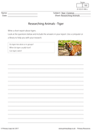 Researching Animals - Tiger