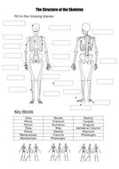 Label a blank skeleton (with key words) by burnsinwigan