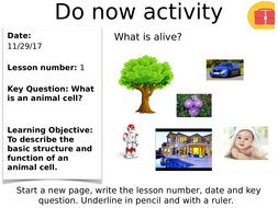 KS3 lesson on Animal cells | Teaching Resources