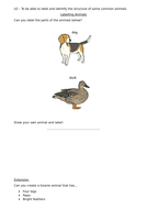 structure-of-common-animals.docx
