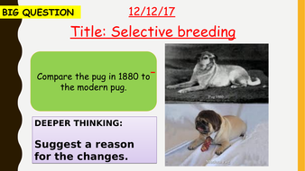 AQA new specification-Selective breeding-B13.3